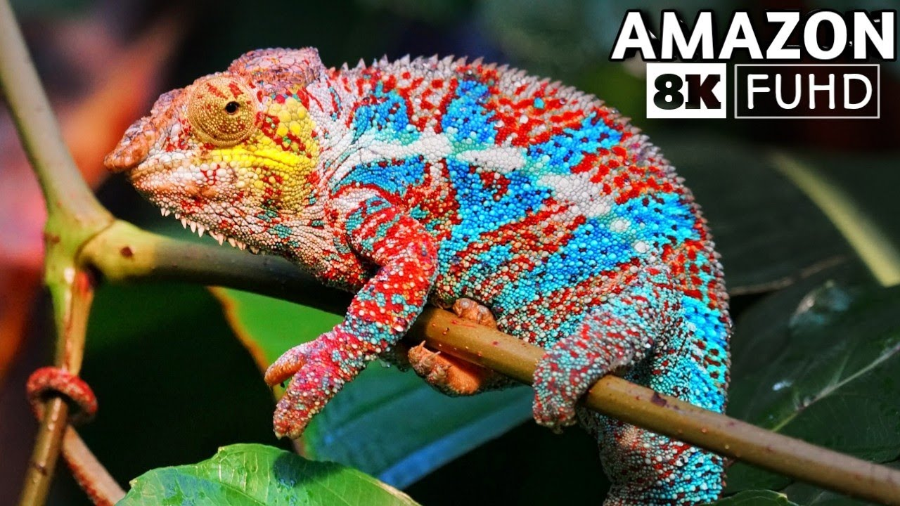 Download Beauty of Amazon Rain Forest 8K