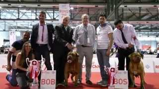 Raduno Wds 2015 - Dogue De Bordeaux - Milano -11-06-2015