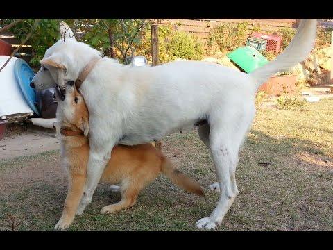 [30] 엄마 진돗개의 즐거운 사냥감 새끼교육과 부부싸움으로 삐져있는 남편개 /Mother dog doing children's education