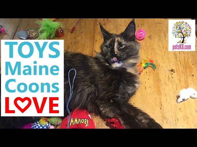 Are Maine Coons playful?
