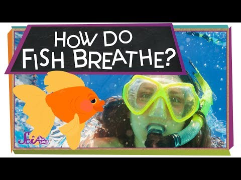 How Do Fish Breathe? | Animal Science For Kids