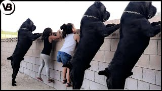This Is How Territorial These Dogs Can Get