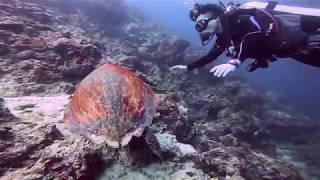 브런치 드시는 바다 거북이 구경하기   A sea tu…
