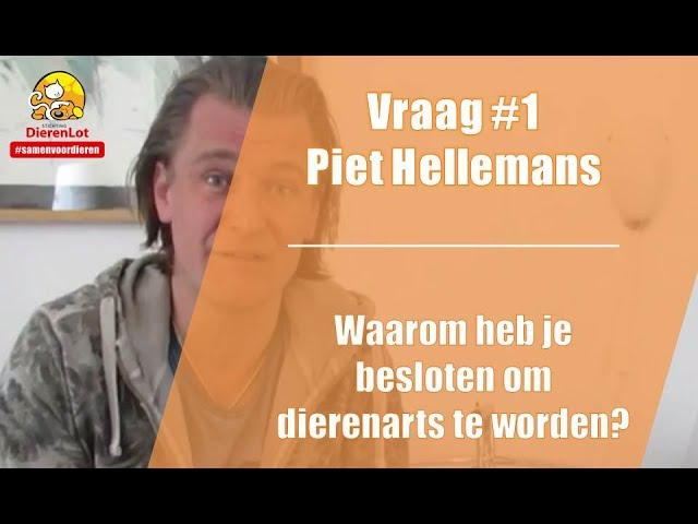 vlog #1 stichting dierenlot met piet hellemans - youtube