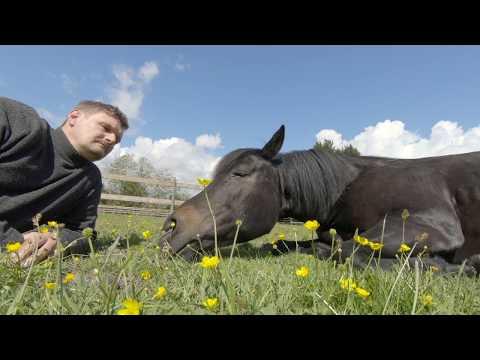We Have A Dream @ Magic Horse Garden