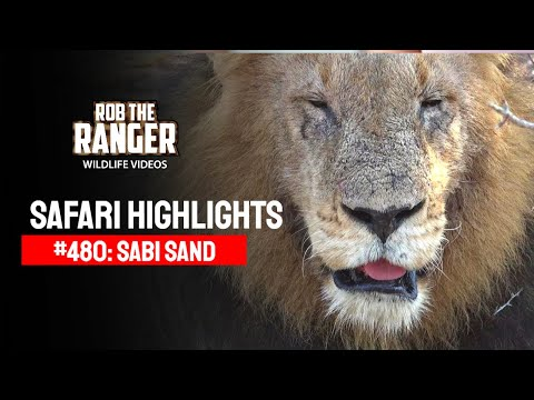 Safari Highlights #480: 06 - 10 August 2017 (Latest Sightings) (4K Video)