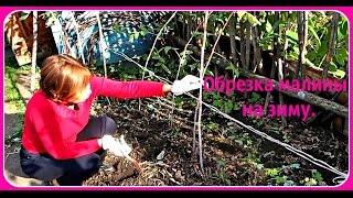 Маленький дачный обзор. Обрезка малины на зиму.(Как подготовить малину к зиме для хорошего урожая на будущий год. Если хорошо осенью потопать, то малинку..., 2015-09-22T07:09:20.000Z)