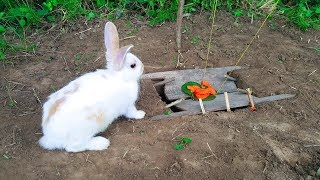 The First Rabbit Trap With Deep Hole by Smart Boy - How To Trap ...