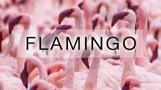 Flamingo, Kenia, Lake Bogoria thumbnail