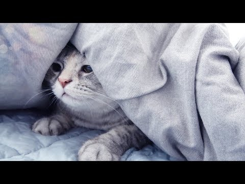 고양이와 집사의 나른한 오후