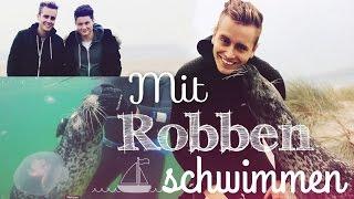 ICH SCHWIMME MIT ROBBEN ..♥ mit Dner & Bibi | Julienco