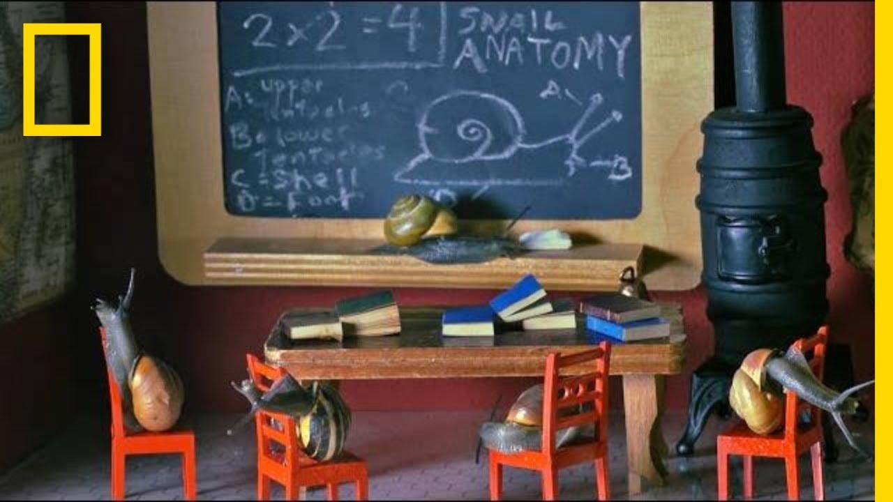 The Strange and Wonderful World of the 'Snail Wrangler' | Short Film Showcase