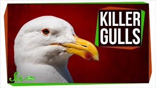 Killer Gulls Rip Into Whales and Murder Seal Pups
