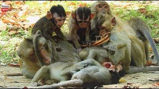 All Baby Monkeys Still Love Ex Hero Leader/ Lovely Group Domestic Animals Youlike Monkey 1633