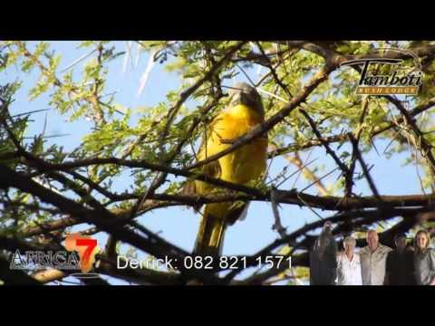 Birds of Tamboti Bush Lodge - Dinokeng Reserve - Africa 7