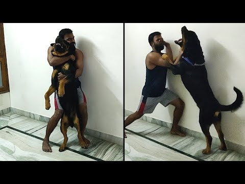 Who plays like this with his dog every morning | Bolt best friend ever
