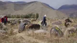 PETROGLYPHS - Ancient Rock Drawings from Kyrgyzstan
