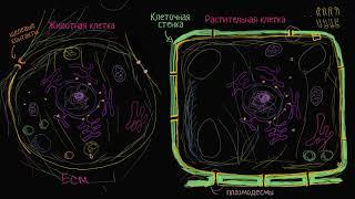 Строение растительной и животной клетки | Строение клетки | Биология (часть 4)