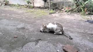 Aksi Kucing Pintar Tangkap Tikus