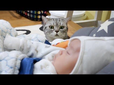 귀여운 아기와 고양이들의 첫만남 Cats' First Encounter with a Baby 赤ちゃんと猫たちの初の出会い[SURI&NOEL]