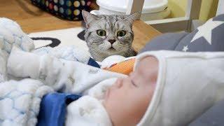 【반려동물】「반려동물」#반려동물,귀여운아기와고양...