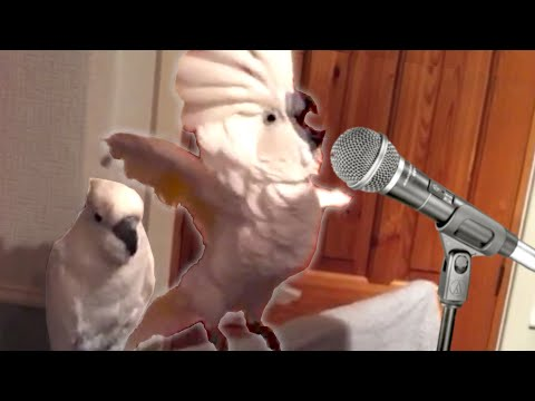 Thumbnail: 19 Funny Bird Videos || Awesome Compilation