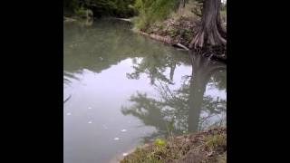 fishing at the guadalupe river state park on our favorite island my girl losing fish like always