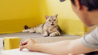 수리노을 고양이들과 소파 조립을 했어요!