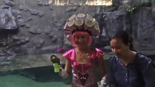 Paw Patrol Chase Costume Halloween Party A Merry Not Scary Kids Event at River Safari