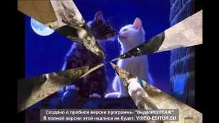 "Машина времени ""кошка гуляет сама по себе""    music, cats."