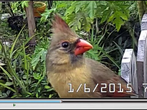 WHAT KIND OF BIRD caught on the charlotte county florida wildlife trail camera