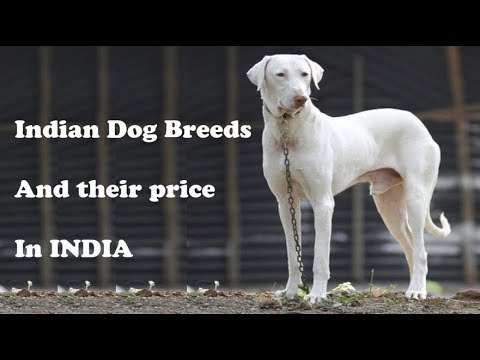Dog Breeds And Their Price In India