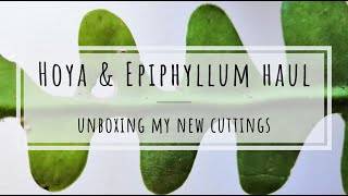 Plant haul unboxing: Hoya and Epiphyllum cuttings