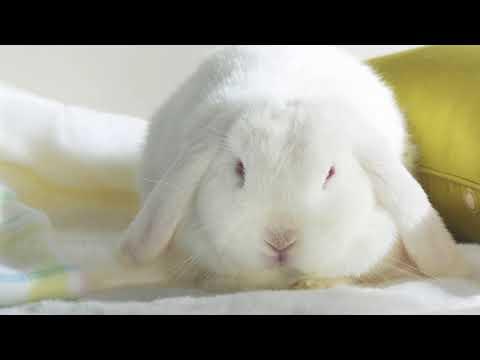 Почему кролик не ест, не пьет и все время лежит?