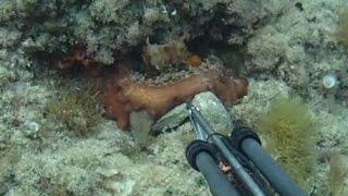 Pesca submarina de sepias y pulpos, de 0 a 2 metros de profundidad JM-QJ