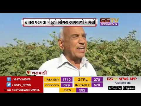 Chota Udepur: Farmer's miserable condition as they get low bonus on cotton