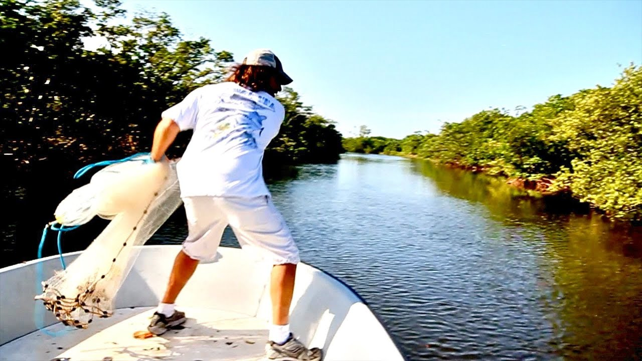 how to catch live bait