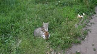 Бездомная кошка играет со своим котенком!  Homeless cat playing with her kitten!