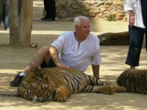Rencontre tigre thailande