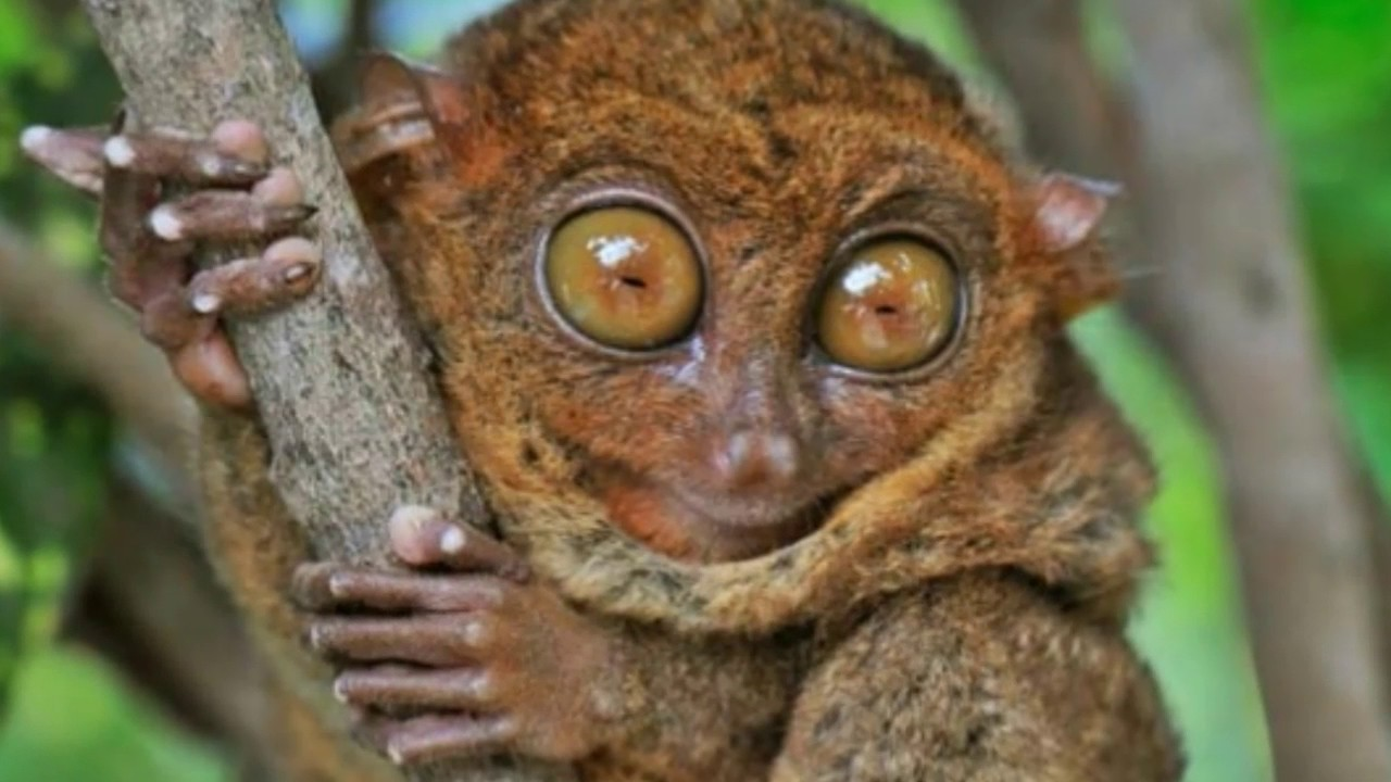 report the tarsier Report, the tarsier essays: over 180,000 report, the tarsier essays, report, the tarsier term papers, report, the tarsier research paper, book reports 184 990 essays, term and research papers available for unlimited access.