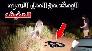 الصل الاسود اخطر انواع الثعابين