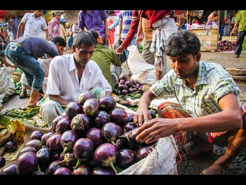 philippine court of appeals bt eggplant