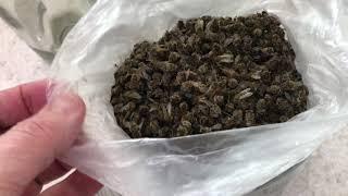 893. Лекарственная настойка из Пчелинного Подмора. Пчелы-целители. Народная медицина.
