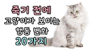 죽기 전에 고양이가 보이는 행동 변화 20가지 | 고양…