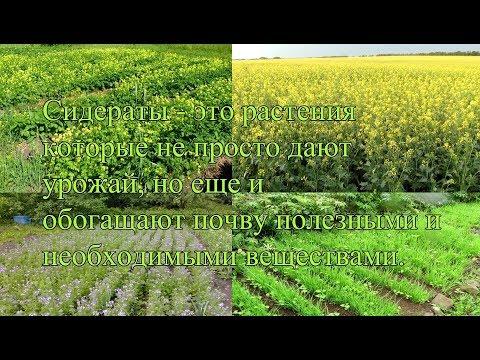 Севооборот на огороде. Что после чего можно сажать на огороде | севооборот | огород | делай | дача | сам