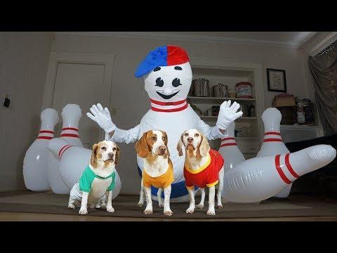 Dogs vs Bowling Prank: Funny Dogs Maymo, Potpie & Penny