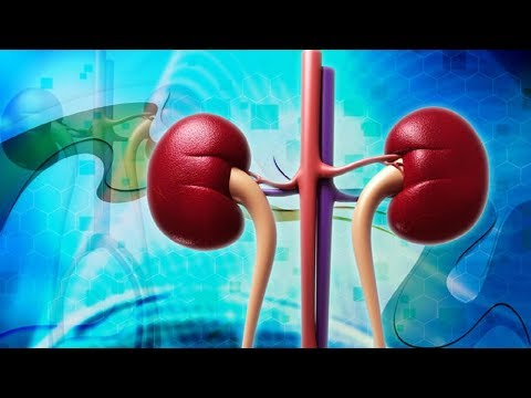 How to Improve Kidney Function - Eat These 5 Superfoods for Healthy Kidneys