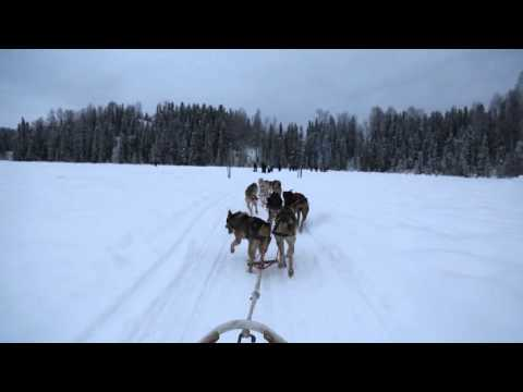 Alaskan Photo Tour! Dog Sledding & Aurora Photography!