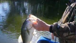 MUDDY WATER SPINNERBAIT BASS .avi