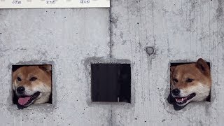 Реалити-шоу «За забором»: японец позволил своим собакам смотреть на прохожих